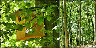 Nistkasten im Waldschutzgebiet Goddelsberg