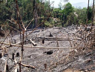 山火事で焼けた森