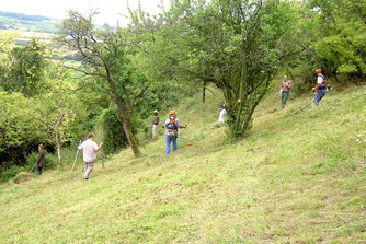 Biotoppflegearbeiten am Bleichkopf (Foto: Christian Henkes/NABU Mainz)