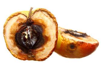 Pallas Apotheke - Rezeptfreie Mittel gegen Pilzerkrankungen der Haut bzw. der Schleimhaut