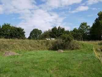 Ziegen und Schafe auf dem Knottenberg (Foto: NABU-Oberbiel)