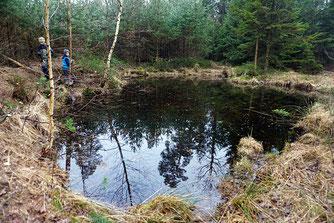 Foto: A.  Röhm, Freischnitt der Amphibienteiche im Oberroder Forst