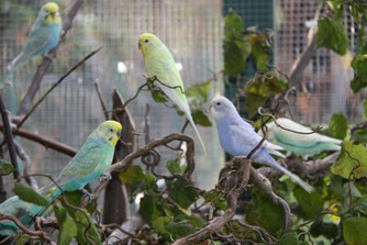 Und sie freuen sich immer über frische Zweige vom Nachbarn ;-)