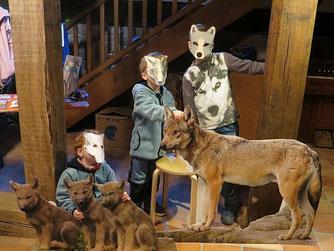 Ein ganzes Wolfsrudel. Bild: Dr. Sybille Winkelhaus