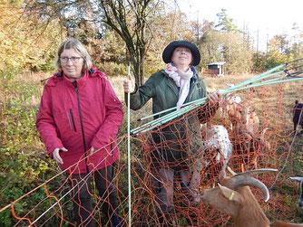 Die Ziegen kennen die Mitglieder der NABU Gruppe Solz und weichen ihnen nicht von der Seite. Foto: Katharina Jacob