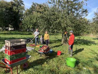 Apfelernte des NABU Rhein-Erft