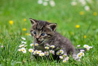 Katze im Garten Bild: Ilona Ilyés/Pixabay