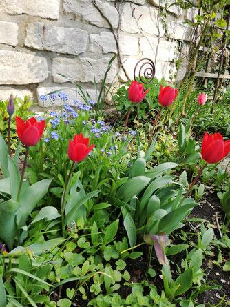Blühende Gartenblumen