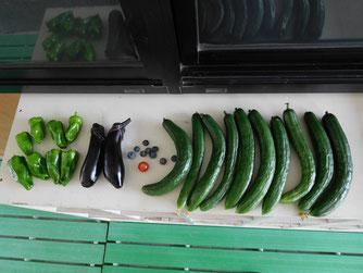 左からピーマン、ナス、ブルーベリー、ミニトマト、キュウリです。