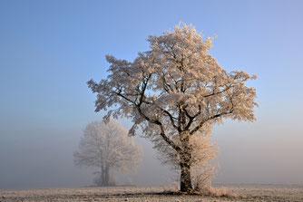 Winter im Wald / NABU/CEWE/Josef Graf