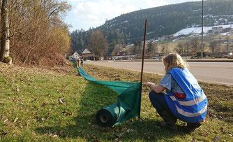 Beim Aufbauen der Krötenschutzzäune in Mitteltal NABU/R.Cornitzius