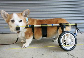 犬の車椅子 犬用車椅子 犬の車いす 犬用車いす 犬の車イス 犬用車イス 歩行器 ドッグカート 犬 車椅子