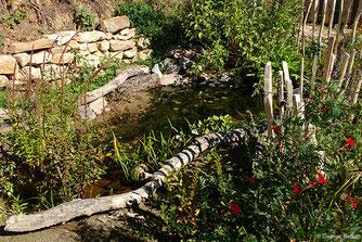 Foto Feuchtbiotop in einem Garten