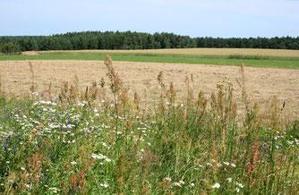 Insektenschutz Wildblumen Blumenwiese Saat Einsaat Ellen NABU Düren