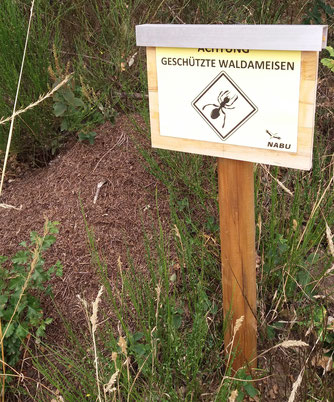 Waldameisen Insekten Obermaubach Bogheim NABU Düren