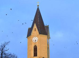 Dohlen umfliegen den Sommerfelder Kirchturm, der Leipzigs zweitgrößte Brutkolonie beherbergt. Foto: Susanne Ulbrich