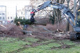 Bei den Fällarbeiten war kein Artenschutzgutachter vor Ort, um zu prüfen ob beispielsweise Fledermäuse in den Baumhöhlen sitzen.