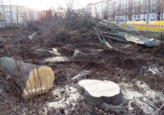 Im Eiltempo wurden 500 m² wertvolle Hecken gerodet und 12 Bäume gefällt, bevor der NABU eingreifen konnte. Foto: NABU Leipzig