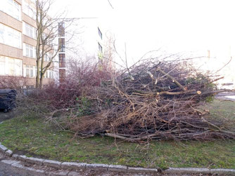 Häufig werden im Umfeld von Baumaßnahmen Grünflächen und Gehölze beseitigt, bei denen es sich um essenzielle Nahrungsstätten von Brutvögeln handelt. Dadurch sinkt der Bruterfolg, Vogelpopulationen können aussterben. Foto: NABU Leipzig