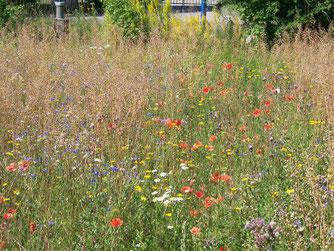 Insektenfreundliche Blühflächen und Stauden mit Sämereien sind natürliche Nahrungsquellen für Vögel. Foto: Steffen Wagner