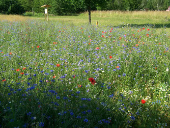 Insektenfreundliche Blühfläche. Foto: Steffen Wagner