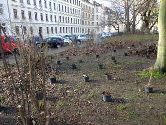 Mit ökologisch wertvollen Gehölzen wurden die bestehenden Strauchpflanzungen ergänzt und ökologisch aufgewertet. Foto: Beatrice Jeschke