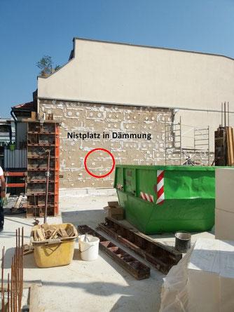 Der Nistplatz befand sich in der Dämmung des Nachbarhauses. Der Neubau verhinderte, dass die Eltern zum Nest gelangen konnten.
