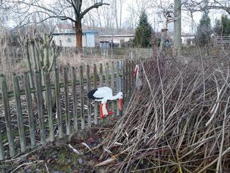 Im Zaubergarten wurden auch zwei Störche entdeckt, die aber bei der Stunde der Wintervögel nicht berücksichtigt werden können. Foto: René Sievert