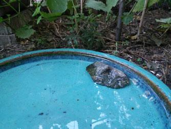 Ein rauer Stein als Trinkhilfe für Insekten.