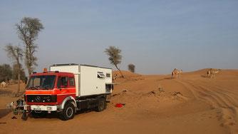 In der Wüste kommen Kamele an unserem Übernachtungsplatz vorbei