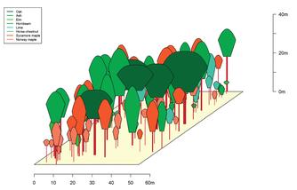 Mit den Daten aus der Waldinventur ist es möglich, ein dreidimensionales Abbild des Waldbestandes zu modellieren. Abbildung: Projekt Lebendige Luppe / UFZ