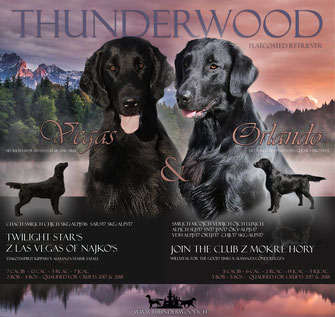 Thunderwood A-Wurf (Orlando und Vegas)