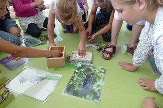 "Klassenzimmerprogramm ""Wir helfen den Insekten"" (Foto: B. Sedlmair)"
