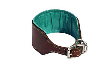 6 cm breites Hundehalsband für Windhunde weiches Fettleder mit Polsterung und türkisem Futter