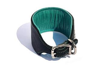 Windhundhalsband schwarz mit Polster und Futterleder in türkis mit Edelstahlschnalle von Bolleband