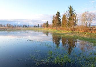 Schweinchen, Ferkel, Glücksschweinchen, Geburtstagskarte Männer, Männer, Karten für Männer, Geburtstagskarte für Männer, Glückwunschkarte für Männer, Fotokarte, Naturbilder,
