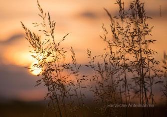 Beileidskarte, Trauerkarte, Sonnenuntergang, Gräser im Sonnenuntergang, stimmungsvolle Beileidskarte