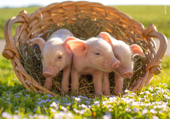 Waldweg, Wald, Herbstwald, Geburtstagskarte Männer, Männer, Karten für Männer, Geburtstagskarte für Männer, Glückwunschkarte für Männer, Fotokarte, Naturbilder,