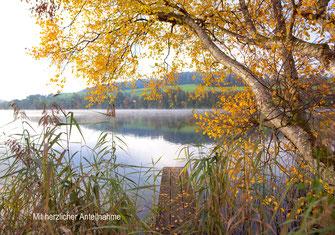 Trauerkarte Herbst Nebel Alberswil Kastelen