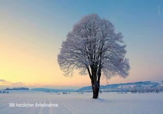 Trauerkarte Baum, Trauerkarte Linde, Trauerkarte Winter, Trauerkarte, Fotokarte