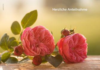 Trauerkarte Rosen im Licht