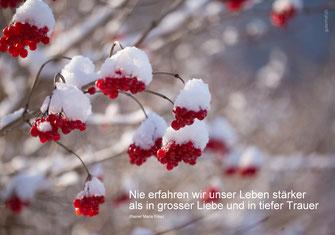 Trauerkarte, Rilke, Spruch Rilke, Schweiz, bestellen, nie erfahren wir unser Leben stärker, Karte mit Trauerspruch