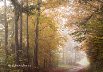 Beileidskarte, Trauerkarte, Sonnenuntergang, Gräser im Sonnenuntergang, stimmungsvolle Beileidskarte, Herbstwald, Trauerkarte Herbst,