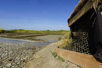 Focus Nature - Location d'affûts sur les marais salants de Noirmoutier ©Alex Roubalay