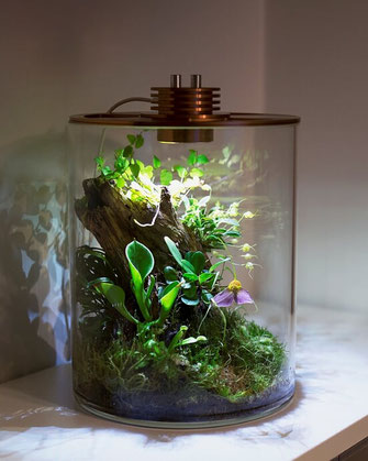 baiosphere tube regenwald pflanzenterrarium