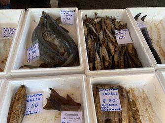 Tallinn, Fischmarkt, Hafen