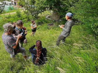 Kräuterkurs, Wildkräuter, Vortrag, Essbares aus der Natur
