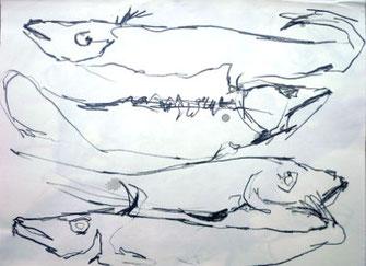 pescalito 14, zeichnung fisch, bleistift