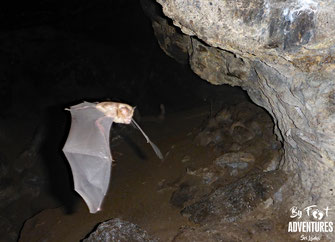 Bats, Leafnosedbats, Cave, Nitro Cave, Knuckles Montains, Waterfall, Trekking, hiking, Adventure, Nature, wildlife, Conservation, Mountains, Travel, Sri Lanka, Daytrip, Conservation, Habitat loss, Trekking in Knuckles, Caveing, Wilderness, Ecotourism
