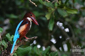 Birds,Birding, Knuckles, Sri Lanka, Knuckles Mountain Range, Wildlife, Animals, TravelSrilanka, VisitSrilanka, Trekking Sri Lanka, Hiking Sri Lanka, Trekking, Hiking, Adventure, Conservation, Holiday, Lodge, Camp, Guiding, Walks, Ecotourism, Qualified